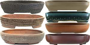 Coarsely structured bonsai pots versus pots with a smooth surface