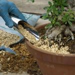 Soil scoop, small, stainless steel, for filling the earth when repotting bonsai. Produced + imported from Japan.