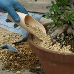 Soil scoop, medium, plastic, for filling the earth when repotting bonsai. Produced + imported from Japan.