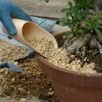 Soil scoops, set of 3 pieces, plastic, for filling the earth when repotting bonsai. Produced + imported from Japan.