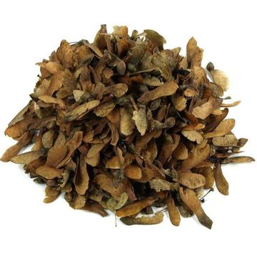 Seed of Acer monspessulanum, French wine maple, 10 pieces
